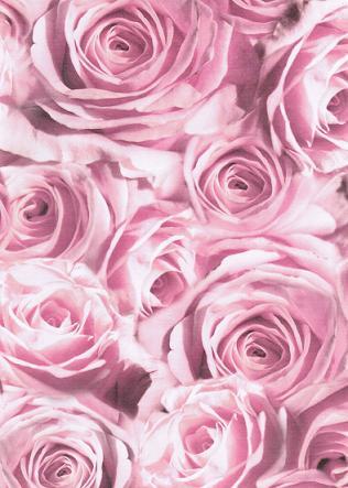 transparentpapier rosen rosa 115 g 50 x 61 cm 1 rolle papiere transparentpapiere. Black Bedroom Furniture Sets. Home Design Ideas